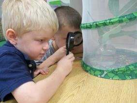 Hatching Butterflies at CAST Preschool and Childcare Center